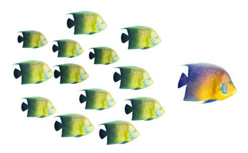Organizzare e dirigere le scuole dell'autonomia: i ruoli organizzativi e gestionali
