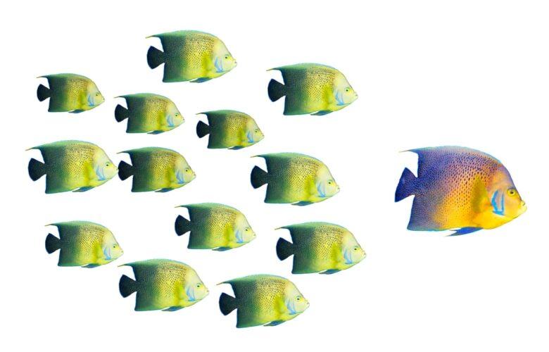 Nuovo corso |  Organizzare e dirigere le scuole dell'autonomia: i ruoli organizzativi e gestionali
